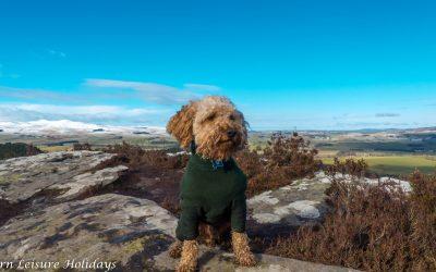 Northumberland Walks: Thrunton Woods