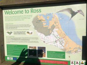 Ross Sands