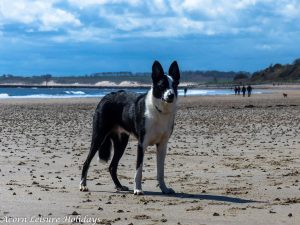 Rollo Alnmouth Beach (1 of 1)