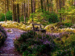 Thrunton Woods View